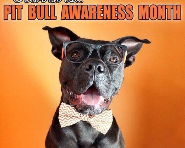 Pitbull awareness month