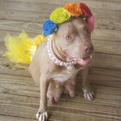 Featured Dog: Mona