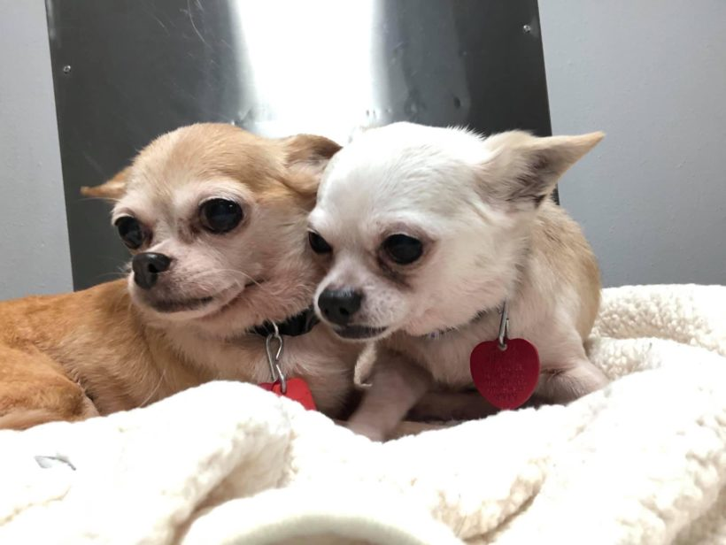 Trixie and Rollie (PENDING)