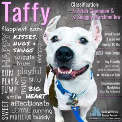 Featured Dog: Taffy